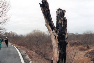 800px-DMZ_incident_tree.jpg
